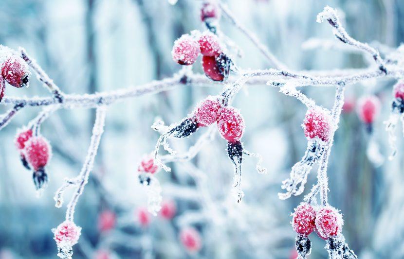Winter (iarna)  Winter-fotolia-1-830x533